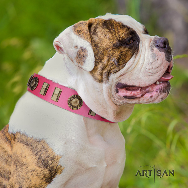 American Bulldog embellished leather dog collar for handy use