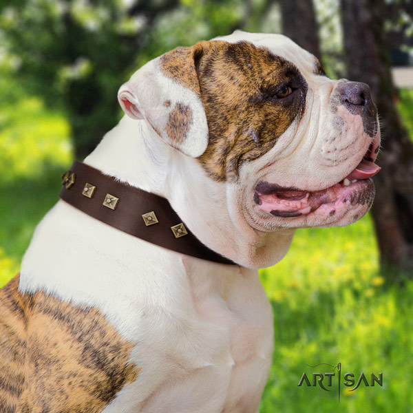 American Bulldog stylish design full grain leather dog collar with embellishments for easy wearing