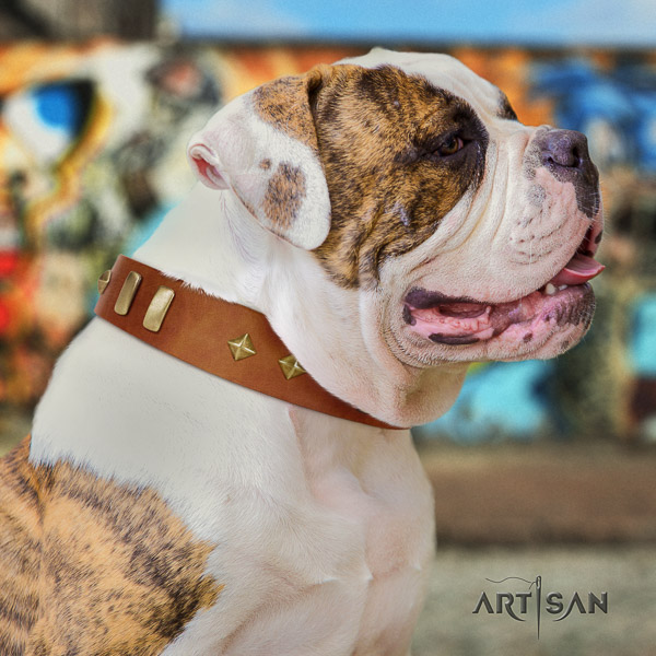 American Bulldog amazing genuine leather dog collar for easy wearing