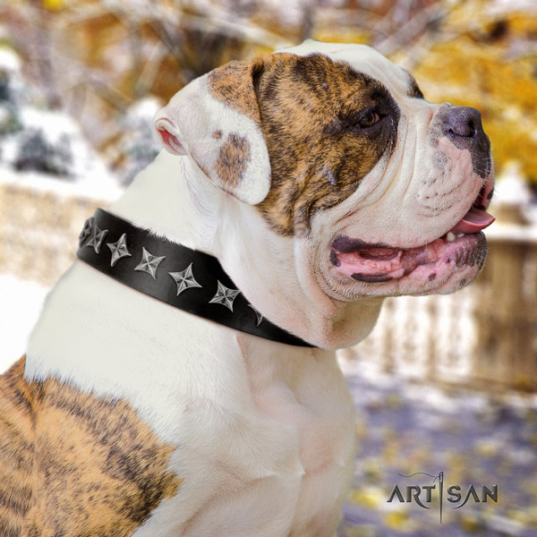American Bulldog top notch genuine leather dog collar with studs for daily walking