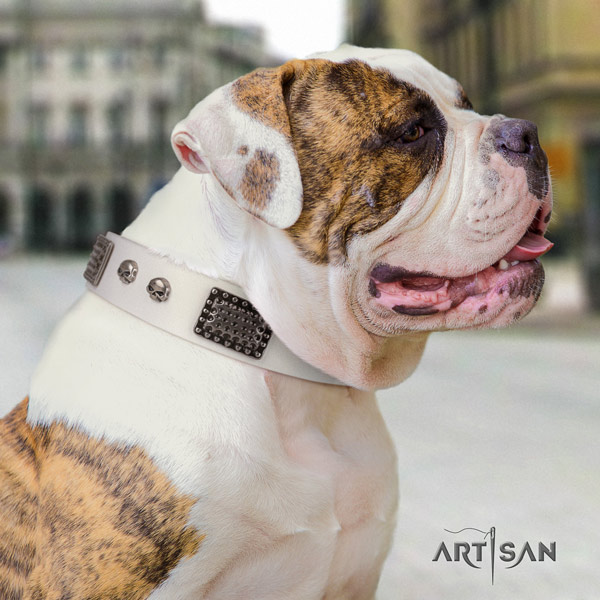 American Bulldog amazing leather dog collar with adornments for handy use
