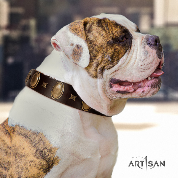 American Bulldog perfect fit full grain natural leather dog collar for walking