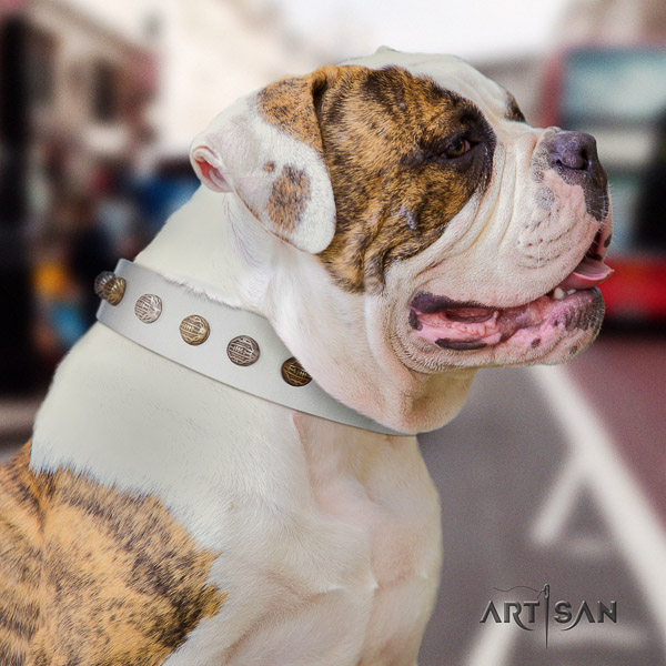 American Bulldog awesome leather dog collar for stylish walking