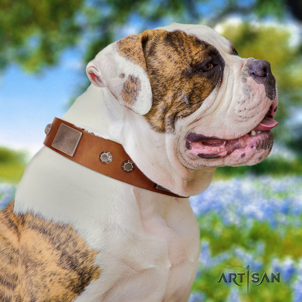 American Bulldog adorned full grain genuine leather dog collar for everyday walking