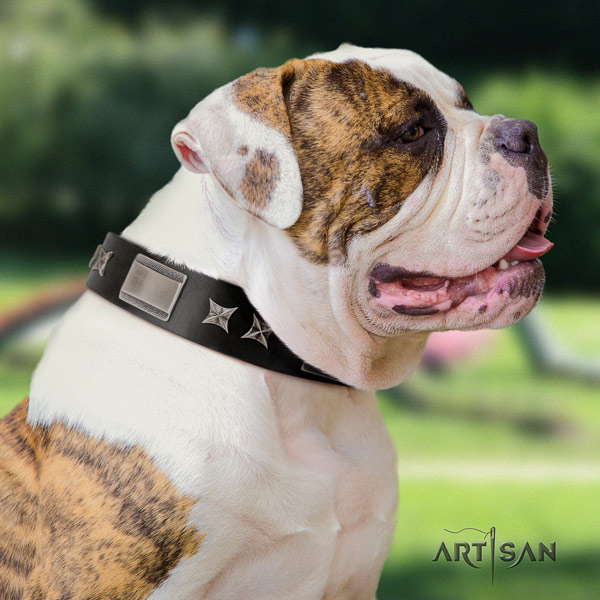American Bulldog top notch genuine leather dog collar with adornments for daily walking