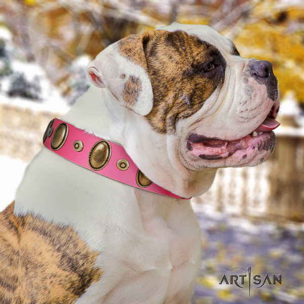 American Bulldog studded natural genuine leather dog collar for daily walking