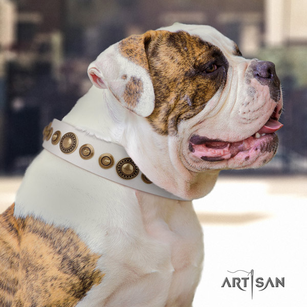 American Bulldog exquisite genuine leather dog collar with embellishments for everyday use