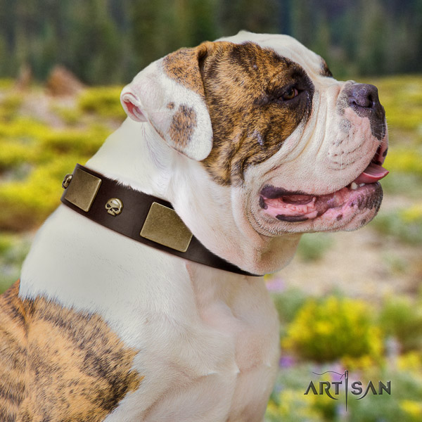 American Bulldog best quality full grain natural leather dog collar for everyday walking