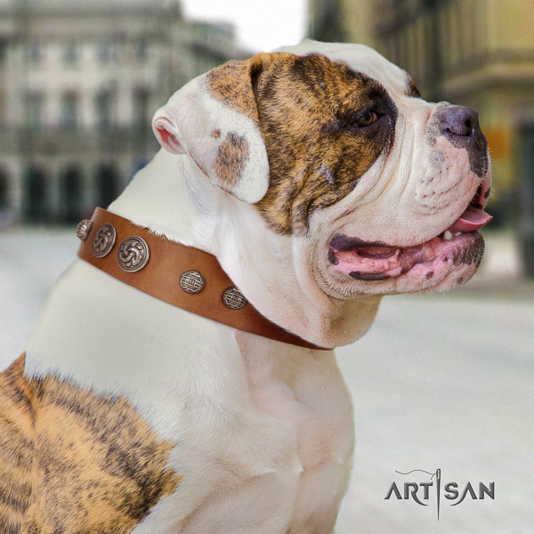 American Bulldog incredible leather dog collar for stylish walking