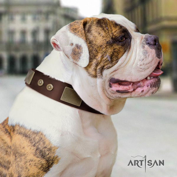 American Bulldog unusual full grain leather dog collar with studs for everyday use
