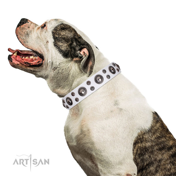 American Bulldog impressive natural genuine leather dog collar for walking