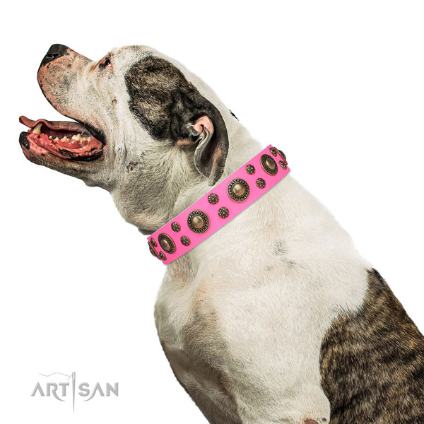 American Bulldog easy adjustable natural genuine leather dog collar for walking