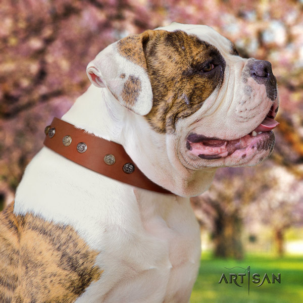 American Bulldog inimitable full grain leather dog collar with studs for comfy wearing