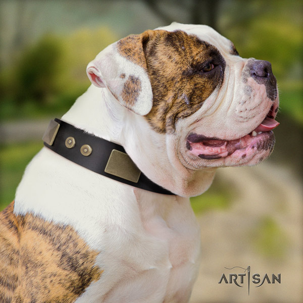 American Bulldog stunning full grain leather dog collar with studs for comfy wearing