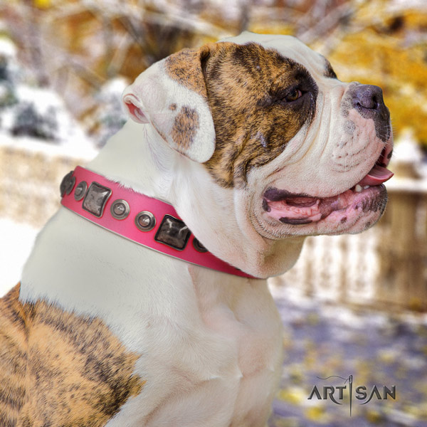 American Bulldog impressive leather dog collar with studs for easy wearing