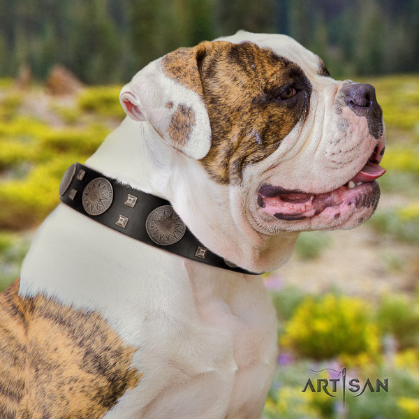 American Bulldog unusual natural genuine leather dog collar for everyday walking