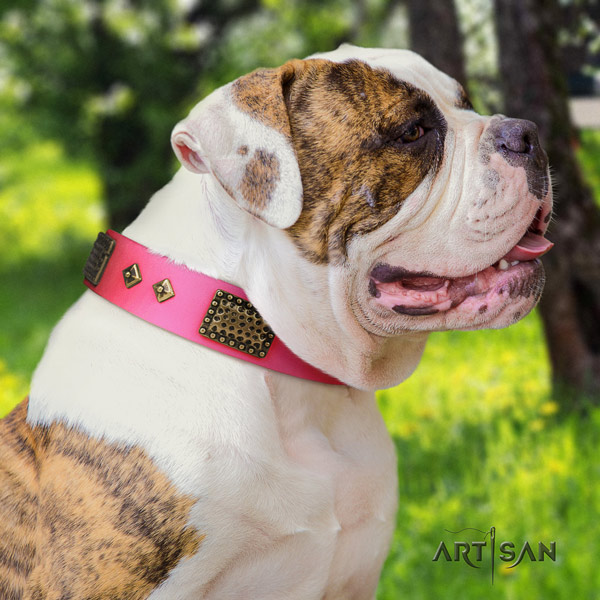 American Bulldog fashionable genuine leather dog collar with adornments for easy wearing