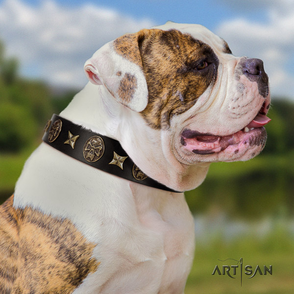 American Bulldog amazing natural genuine leather dog collar for easy wearing