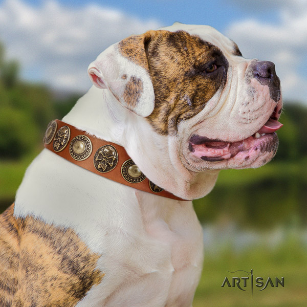 American Bulldog walking full grain leather collar with exquisite studs for your dog