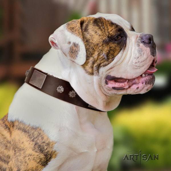 American Bulldog handmade natural genuine leather dog collar for daily walking