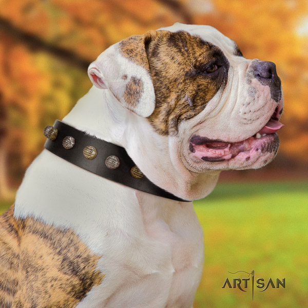 American Bulldog stylish design genuine leather dog collar for comfortable wearing