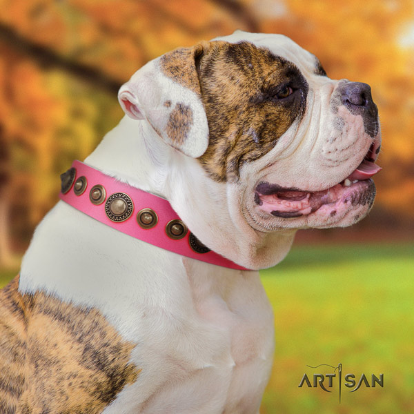 American Bulldog stunning genuine leather dog collar with studs for fancy walking