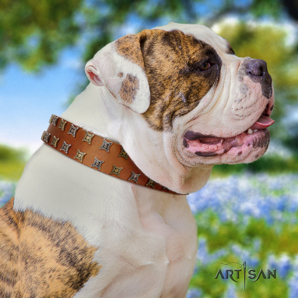 American Bulldog incredible leather dog collar for comfy wearing