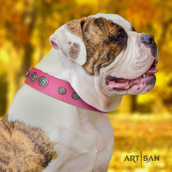 American Bulldog exceptional genuine leather dog collar for walking