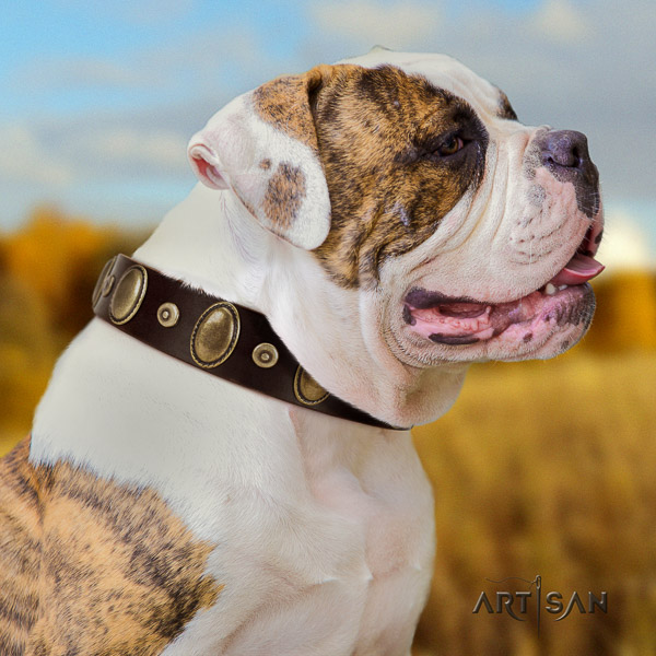 American Bulldog significant leather dog collar for stylish walking