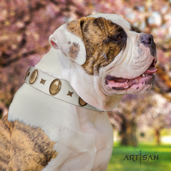 American Bulldog convenient leather dog collar for everyday walking