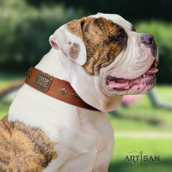 American Bulldog exquisite leather dog collar with studs for fancy walking