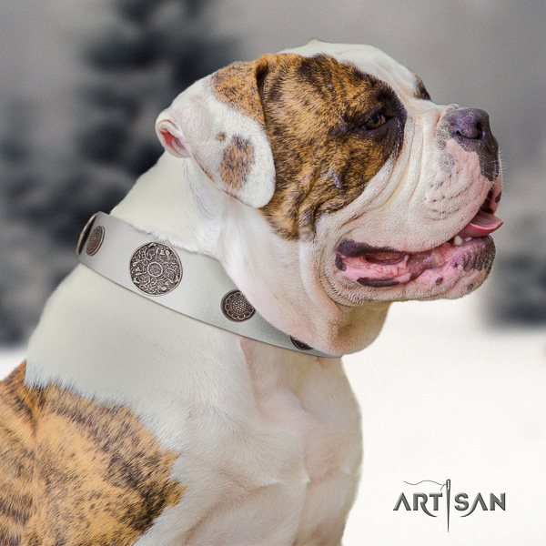 American Bulldog impressive full grain genuine leather dog collar for everyday use