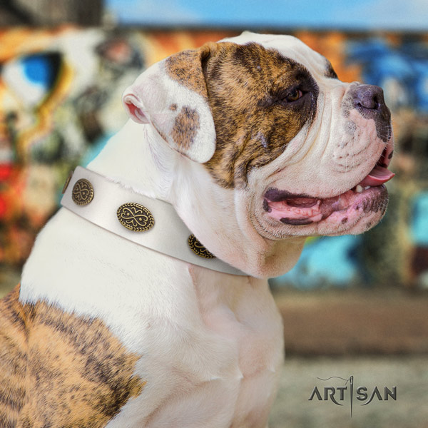 American Bulldog unique genuine leather dog collar with decorations for everyday walking