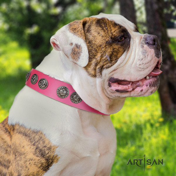 American Bulldog stylish design natural genuine leather dog collar for handy use
