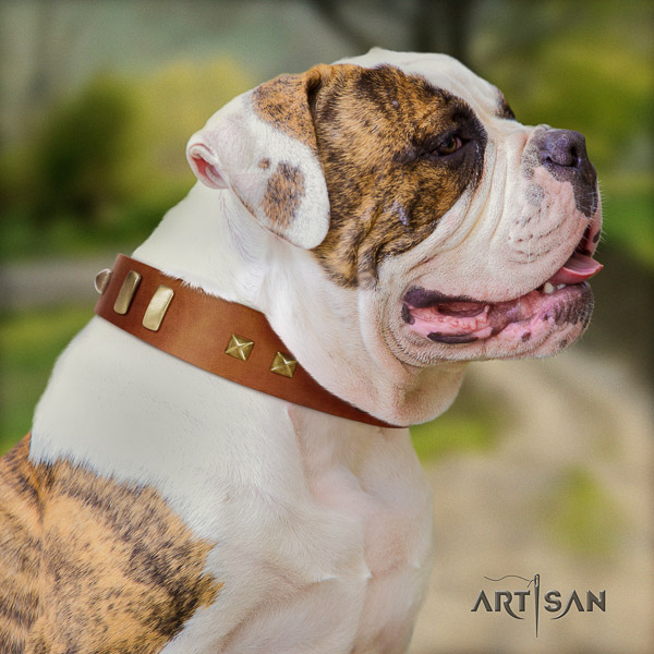 American Bulldog stylish full grain leather dog collar for basic training