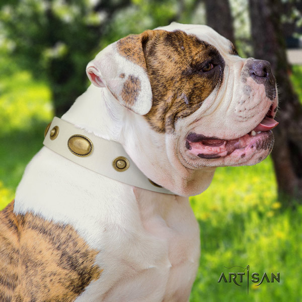 American Bulldog unique leather dog collar with decorations for basic training