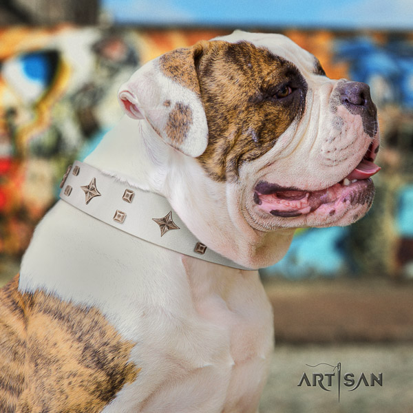 American Bulldog easy wearing natural genuine leather dog collar for basic training