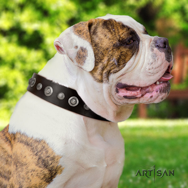 American Bulldog stylish design leather dog collar with studs for stylish walking
