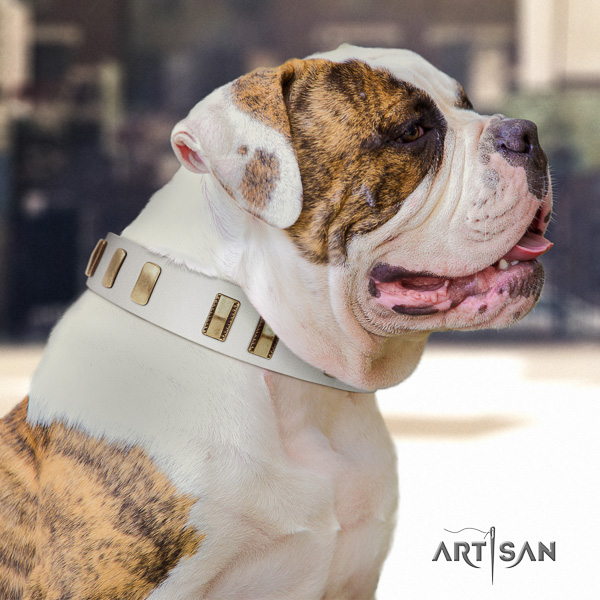 American Bulldog incredible full grain natural leather dog collar for walking