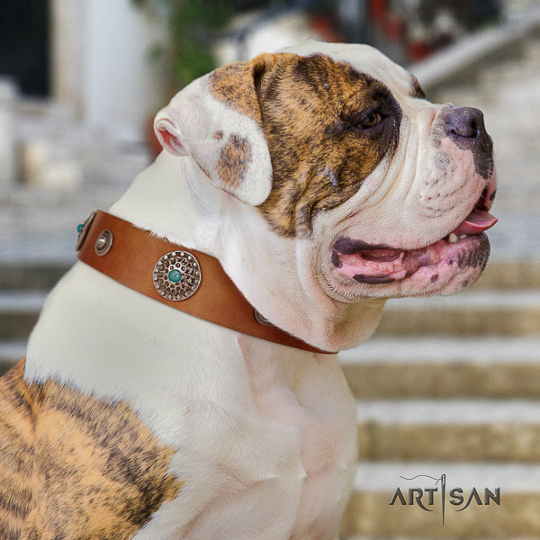 American Bulldog fine quality natural genuine leather dog collar for stylish walking