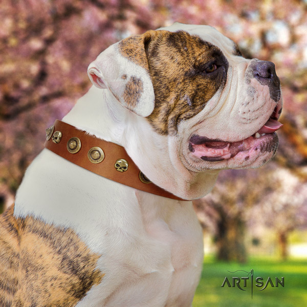 American Bulldog amazing genuine leather dog collar for daily use