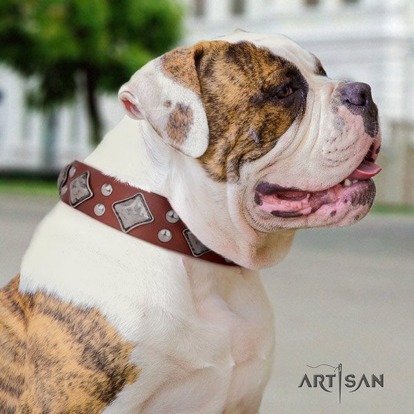 American Bulldog unusual genuine leather dog collar with decorations for basic training