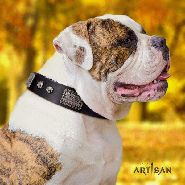 American Bulldog inimitable genuine leather dog collar with embellishments for fancy walking