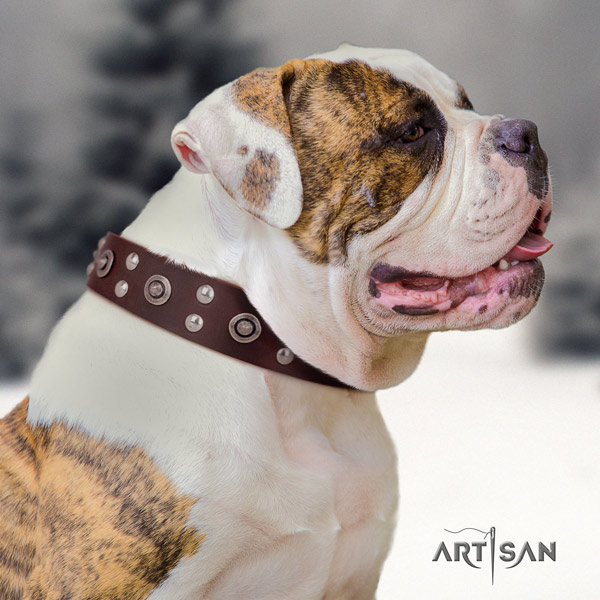 American Bulldog unique leather dog collar with studs for everyday use