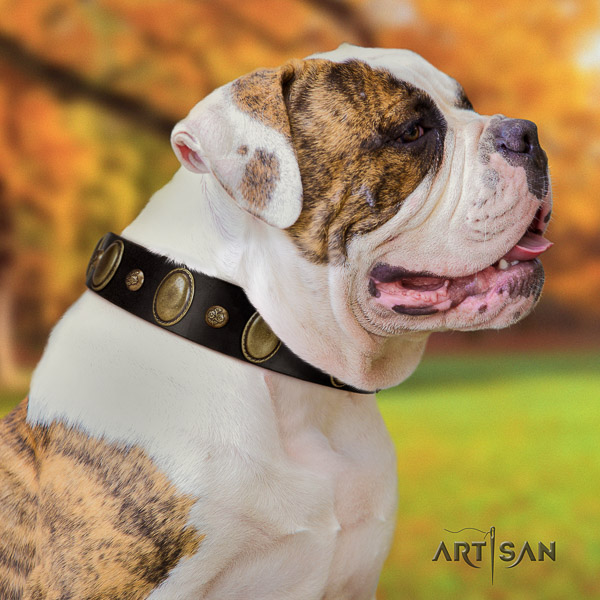 American Bulldog handcrafted full grain natural leather dog collar for handy use