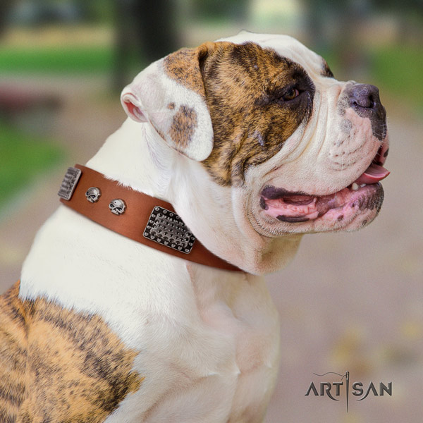 American Bulldog remarkable full grain leather dog collar with decorations for daily walking