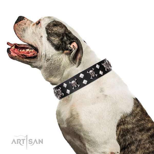 American Bulldog easy adjustable full grain leather dog collar for daily use