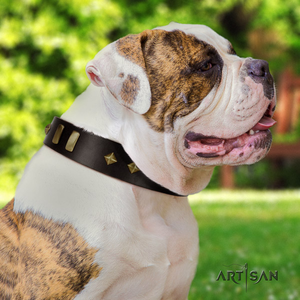American Bulldog studded full grain leather dog collar for basic training