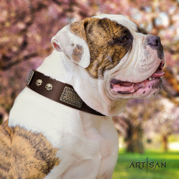 American Bulldog exquisite genuine leather dog collar with studs for comfy wearing