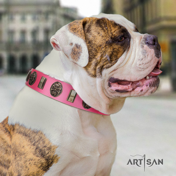 American Bulldog basic training full grain leather collar with extraordinary studs for your dog